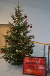 Der Weihnachtsbaum im Rathaus